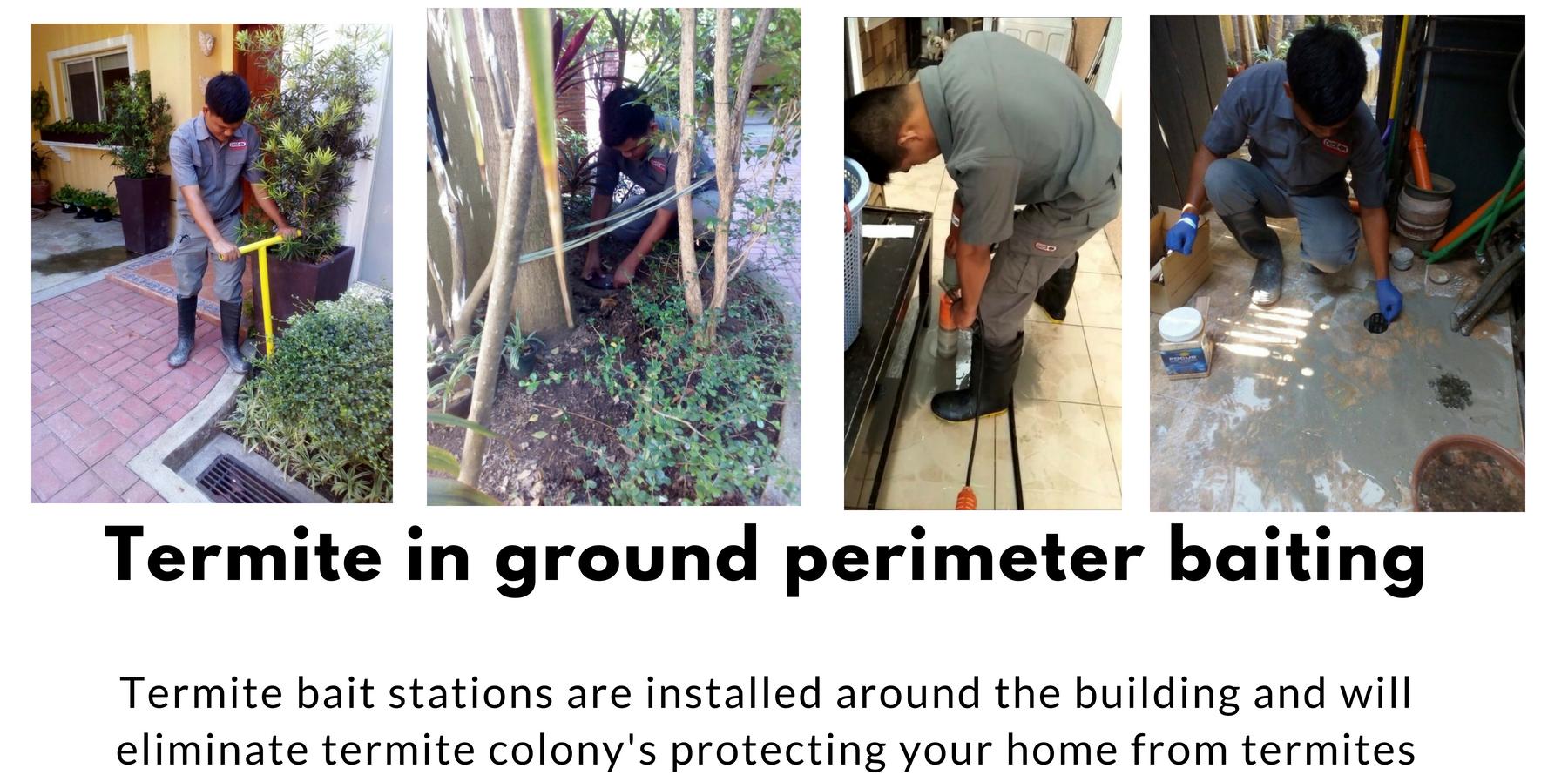 Termite Control Manila Philippines Pest Ex Pest Ex Philippines