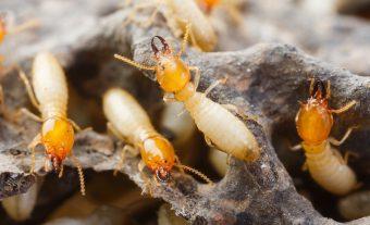 termite-control-metro-manila